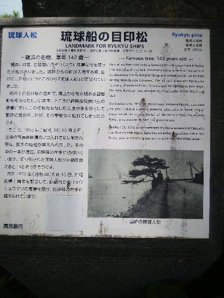 琉球船の目印松