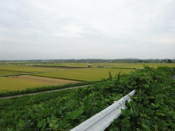 180901明野ひまわり1 (1)