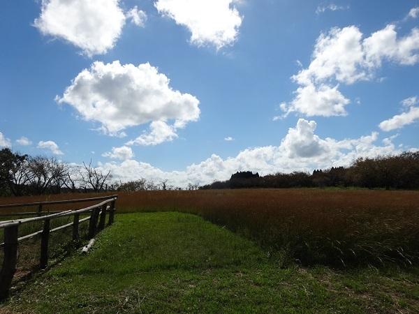 181006秋元牧場 (13)