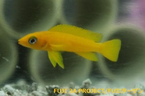ネオランプロローグスレレウピーオレンジ