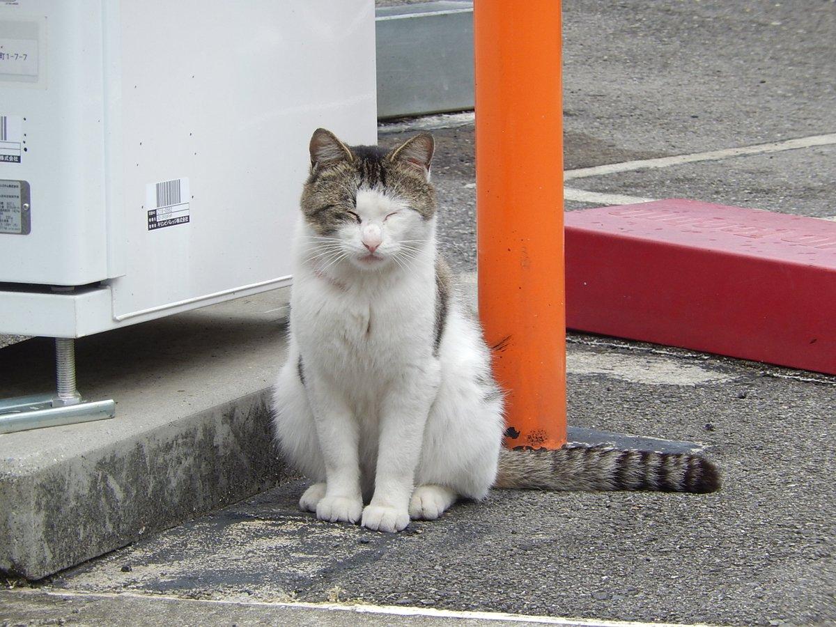 自販機の横の猫