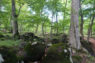 四季の里 水林自然林