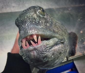 深海の見た目が恐ろしい生物05