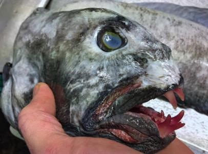 深海の見た目が恐ろしい生物06
