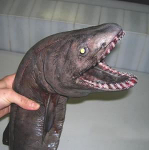 深海の見た目が恐ろしい生物17
