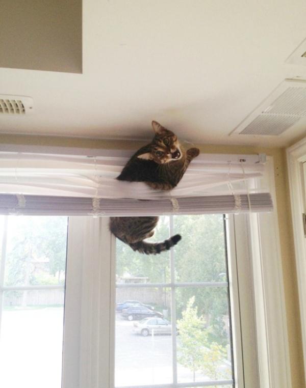 危険な状態になっているネコの画像(9枚目)