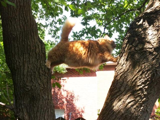 危険な状態になっているネコの画像(10枚目)