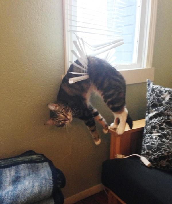 危険な状態になっているネコの画像(11枚目)