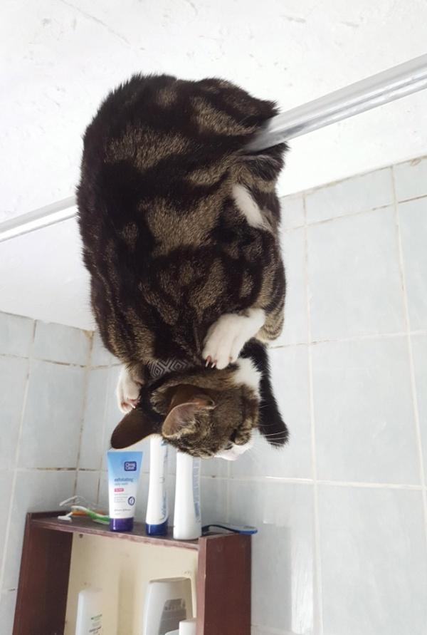 危険な状態になっているネコの画像(12枚目)