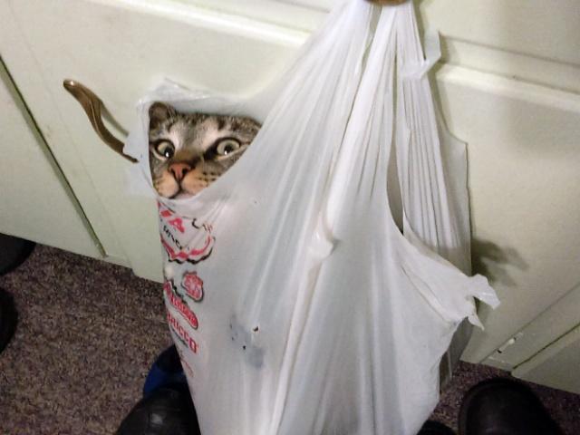 危険な状態になっているネコの画像(15枚目)