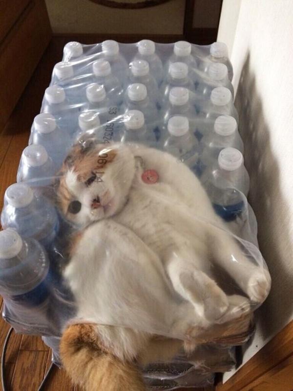 危険な状態になっているネコの画像(3枚目)