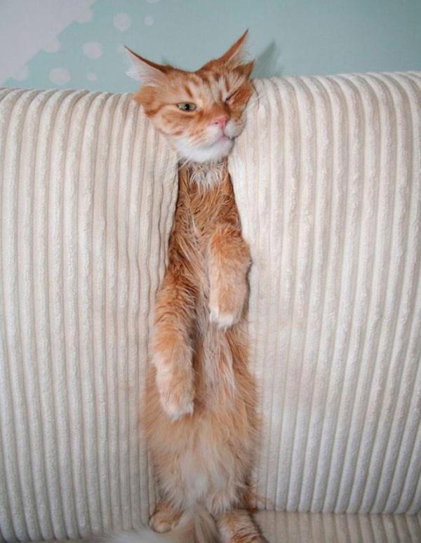危険な状態になっているネコの画像(4枚目)