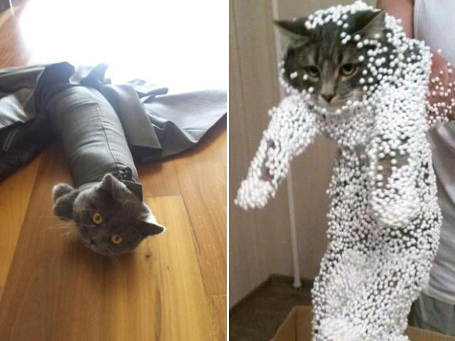 危険な状態になっているネコの画像(5枚目)