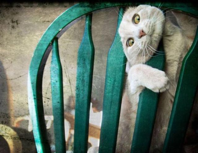 危険な状態になっているネコの画像(6枚目)