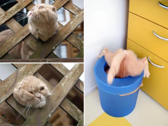 危険な状態になっているネコの画像(7枚目)