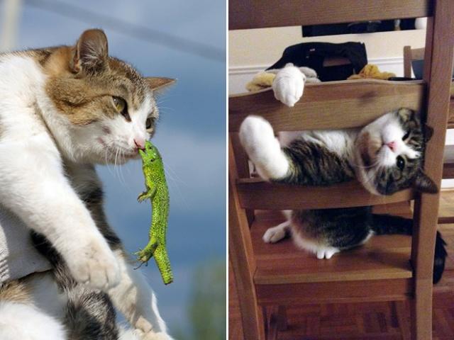 危険な状態になっているネコの画像(8枚目)
