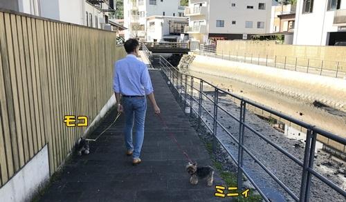 散歩10.7