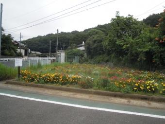 何時もの花畑180820