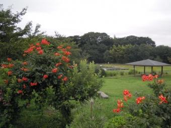 厳島湿生公園180820