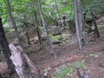 暫く傾斜の緩い樹林帯を180825