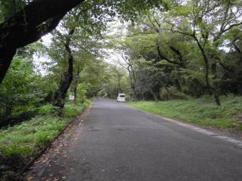 沼目の桜並木180911