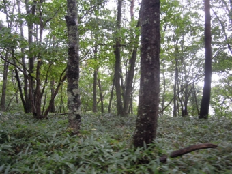 編笠山への登山道樹林帯180915