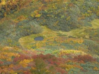 登山道から百草池181005