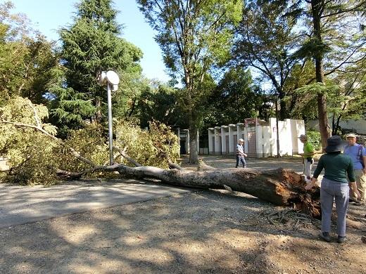 台風被害井の頭公園1