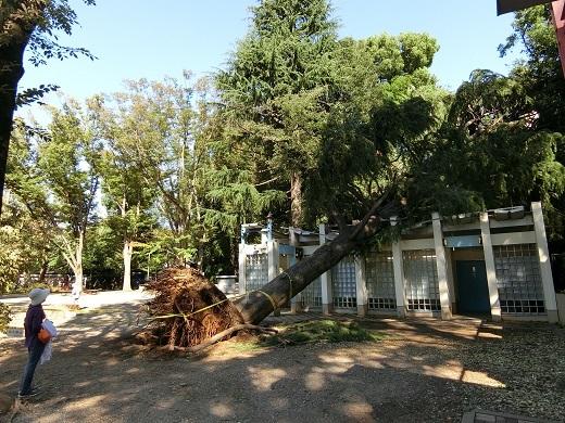台風被害井の頭公園3