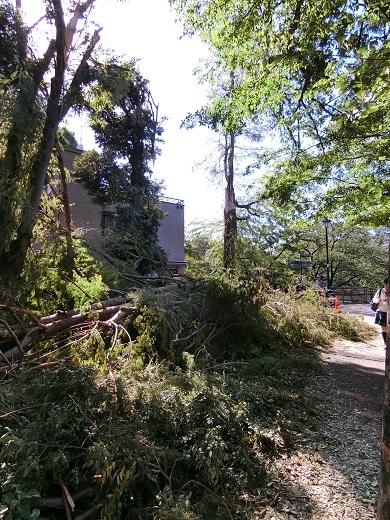 台風被害井の頭公園5