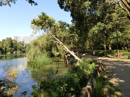 台風被害井の頭公園6 - コピー