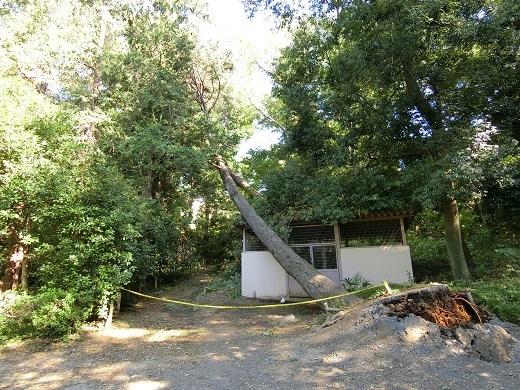 台風被害井の頭公園7 - コピー