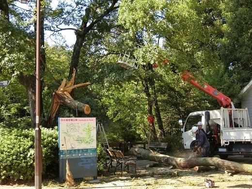 台風被害井の頭公園13