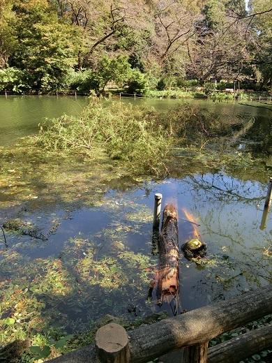 台風被害井の頭公園15