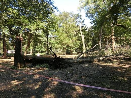 台風被害井の頭公園19
