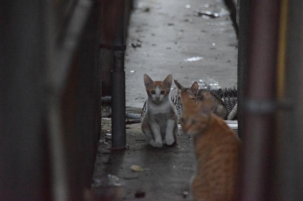 猫4,6,7