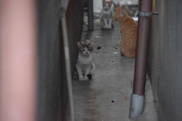 猫4,6,7,8