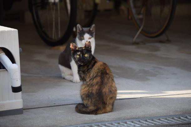 猫12,14