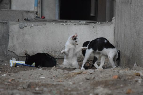 猫11,12,13