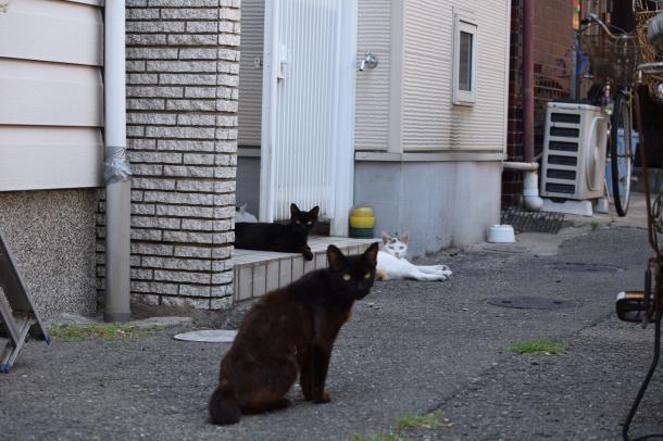 猫1,2,3,4,5
