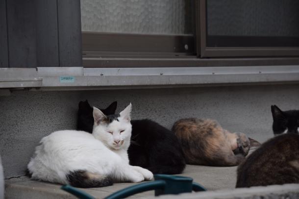 猫11,12,13,14,15