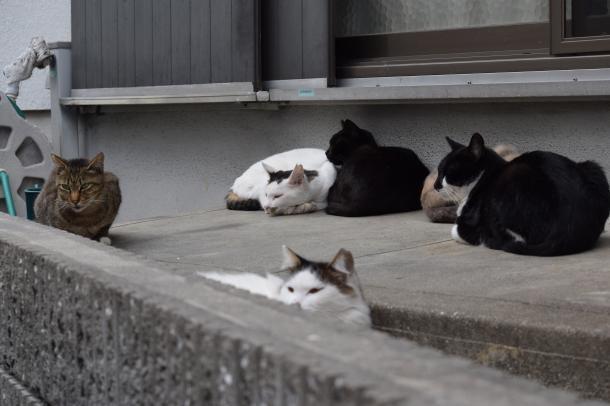 猫11,12,13,14,16,17