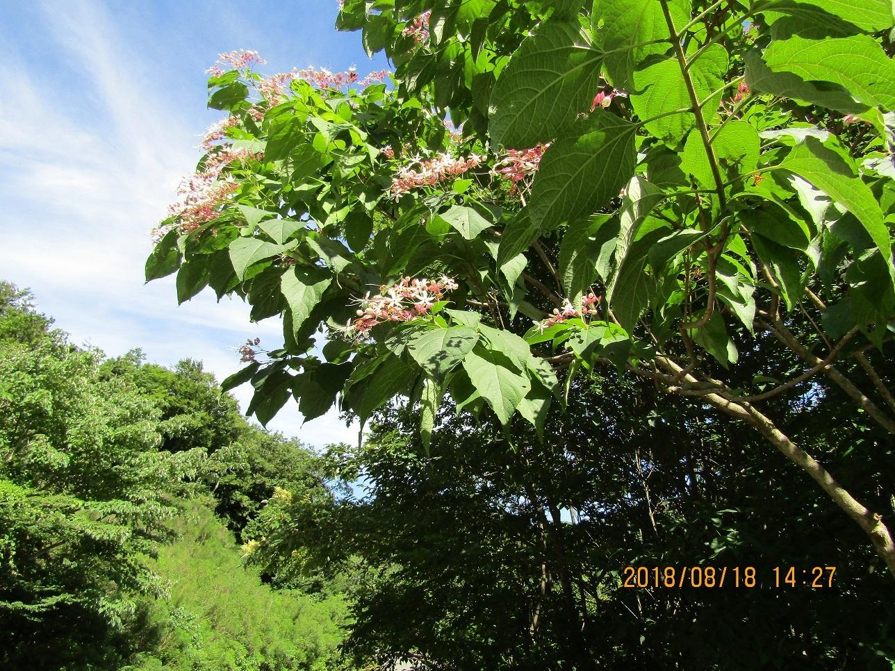 十二湖の木の実