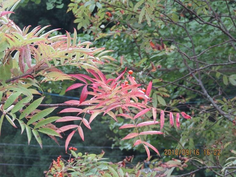 真瀬川の花2