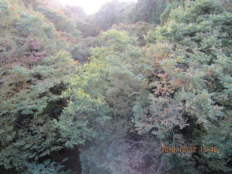 泊川の紅葉3
