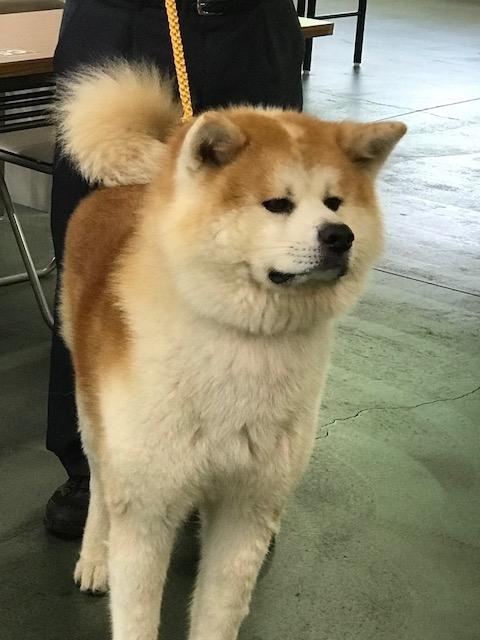 秋田県成犬2018819