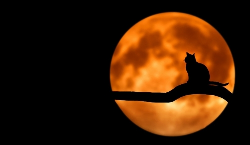 20180917top_cat_and_moon.jpg
