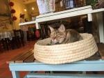 台湾ホウトン猫カフェ3