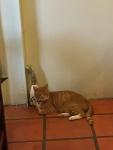 台湾ホウトン猫カフェ4