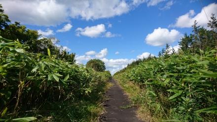 北海道をめぐる6日間 2日目 幸せ求め、最果ての地へ駆ける。